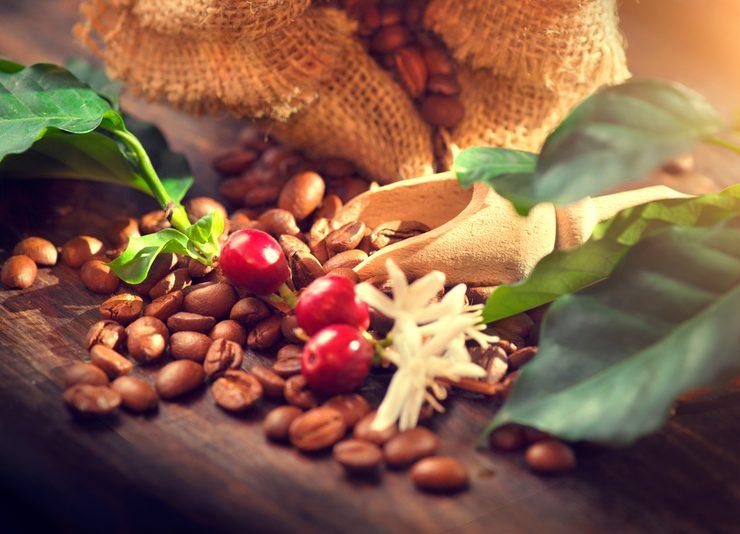 kahve üretimi