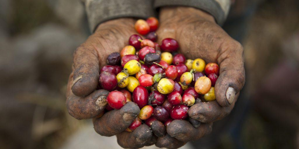 kahve terimleri, fair trade