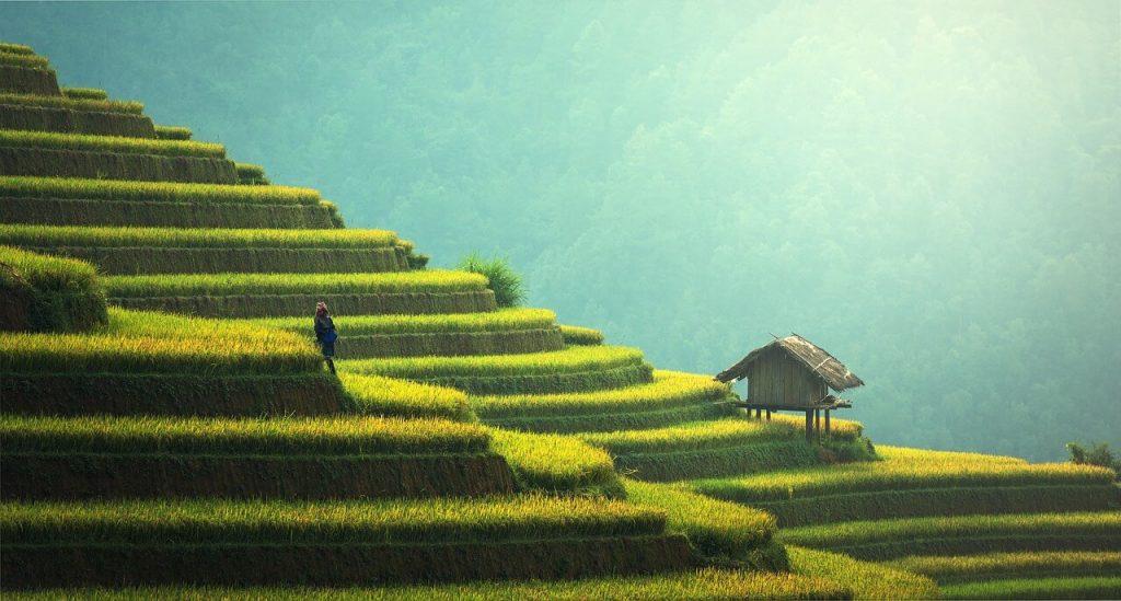 kahve nerede yetişir, vietnam
